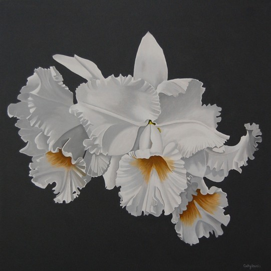 Orchid Painting - White Frilled Orchid